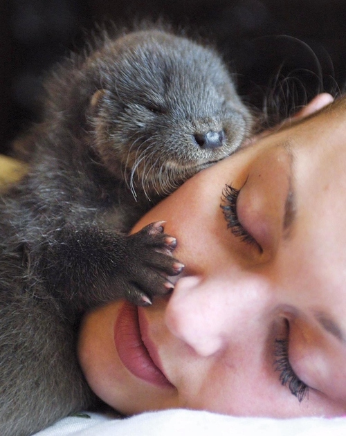 Baby Otter 2