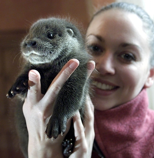 Baby Otter 3